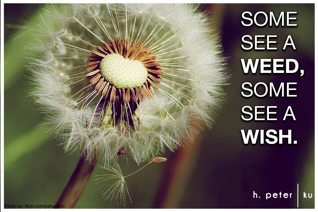 Some see a weed - Some see a wish