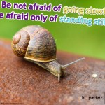 Be-not-afraid-of-going-slowly-be-afraid-only-of-standing-still