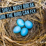 The-shell-must-break-before-the-bird-can-fly