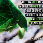 The-tiny-seed-knew-that-in-order-to-grow-it-needed-to-be-dropped-in-dirt-covered-in-darkness-and-struggle-to-reach-the-light