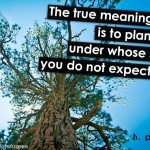 The-true-meaning-of-life-is-to-plant-trees-under-whose-shade-you-do-not-expect-to-sit