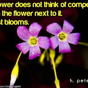 A-flower-does-not-think-of-competing-with-the-flower-to-it-it-just-blooms