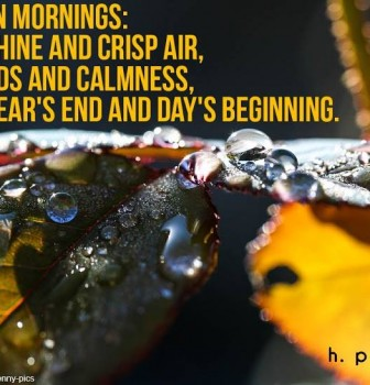 Autumn mornings – Sunshine and crisp air – Birds and calmness – Yera's end and day's beginning