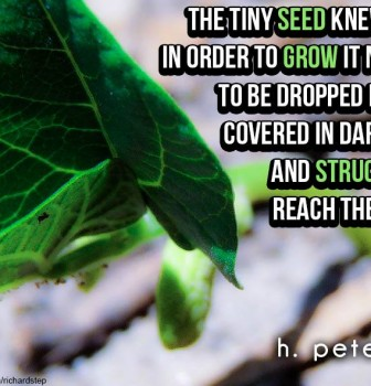 The tiny seed knew that in order to grow it needed to be dropped in dirt covered in darkness and struggle to reach the light