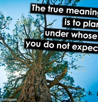 The true meaning of life is to plant trees under whose shade you do not expect to sit
